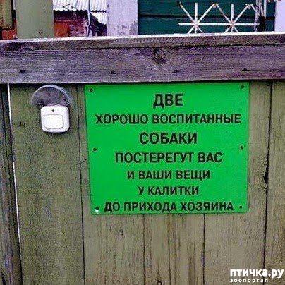 фото 3: Забавные объявления про животных)))
