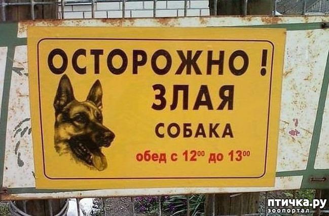 фото 4: Забавные объявления про животных)))