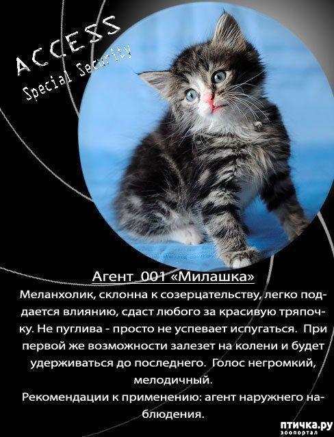 фото 6: Забавные объявления про животных)))
