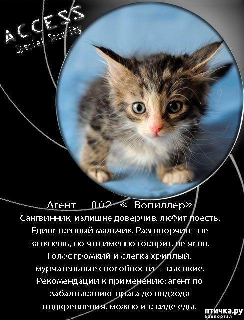 фото 7: Забавные объявления про животных)))