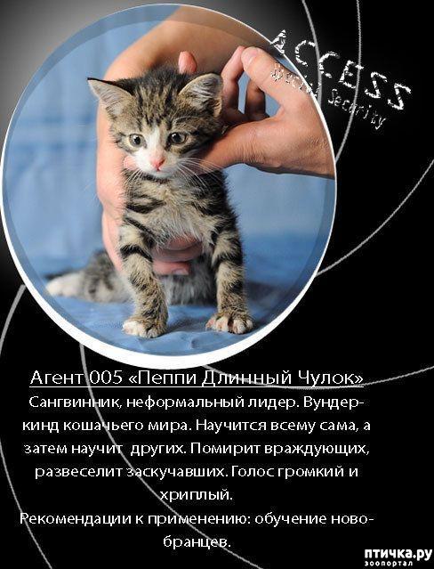 фото 8: Забавные объявления про животных)))