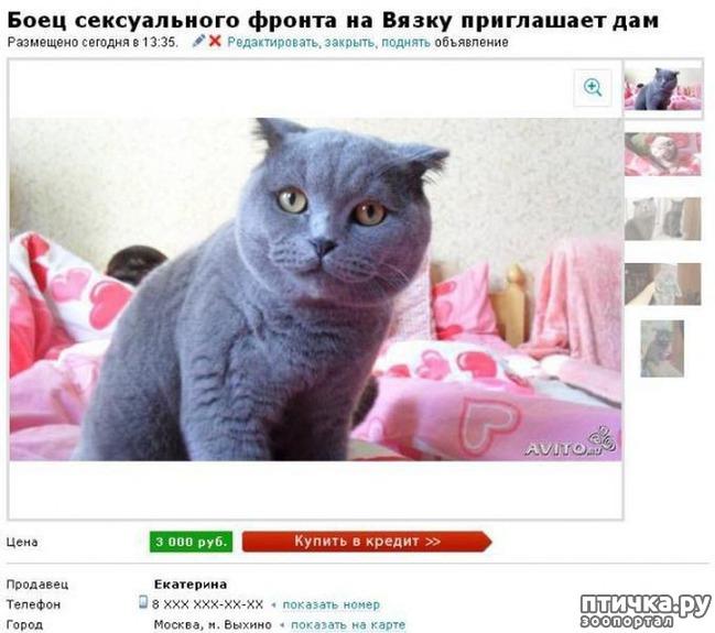 фото 9: Забавные объявления про животных)))