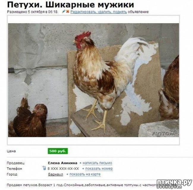 фото 11: Забавные объявления про животных)))