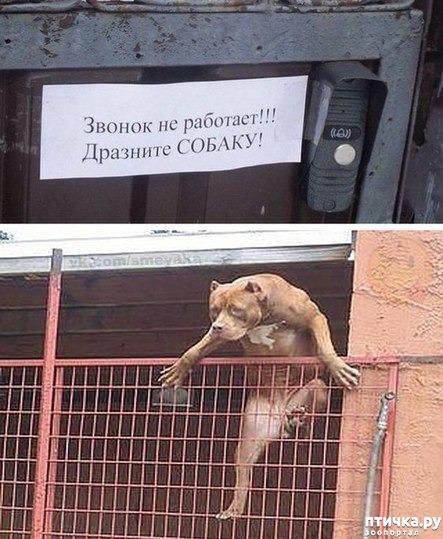 фото 12: Забавные объявления про животных)))