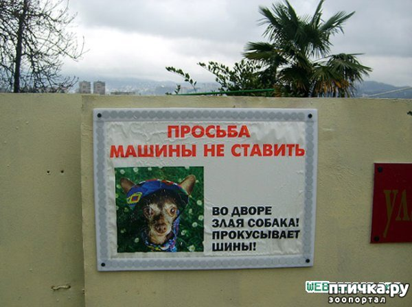 фото 13: Забавные объявления про животных)))