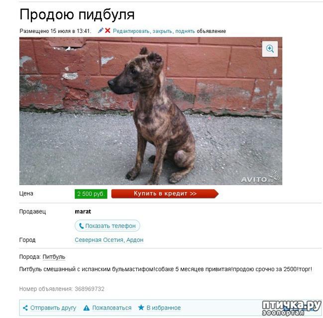 фото 14: Забавные объявления про животных)))