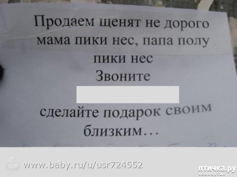 фото 15: Забавные объявления про животных)))