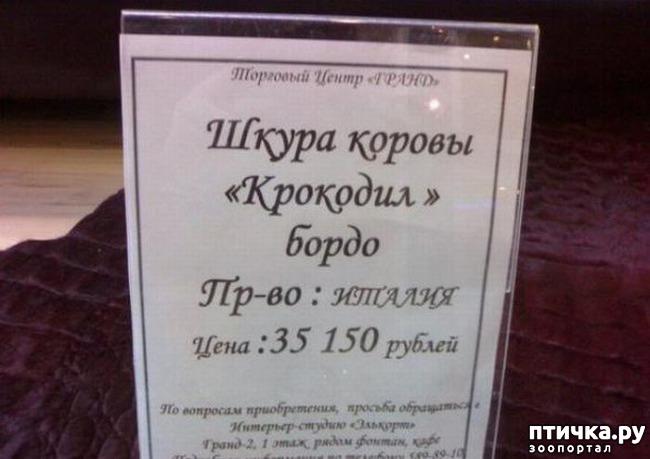 фото 16: Забавные объявления про животных)))