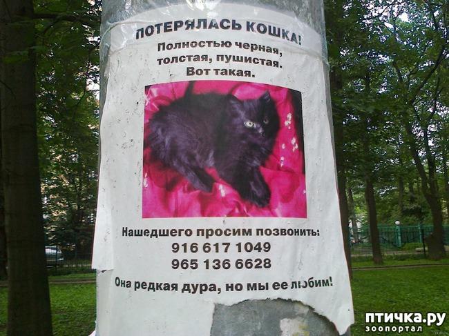 фото 17: Забавные объявления про животных)))
