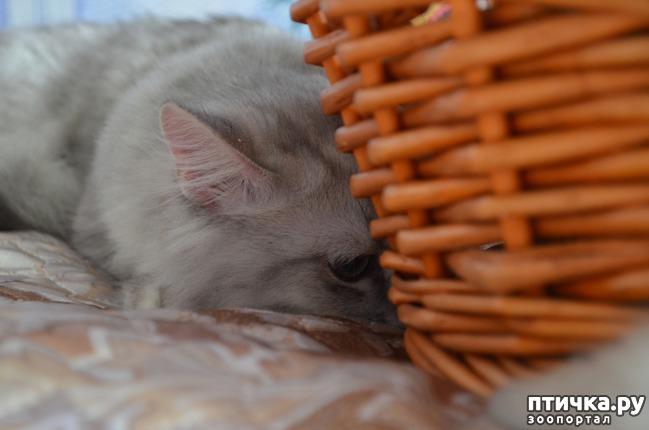 фото 28: Нас поработили инопланетяне или котята открыли глазки