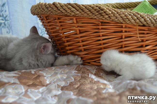фото 29: Нас поработили инопланетяне или котята открыли глазки
