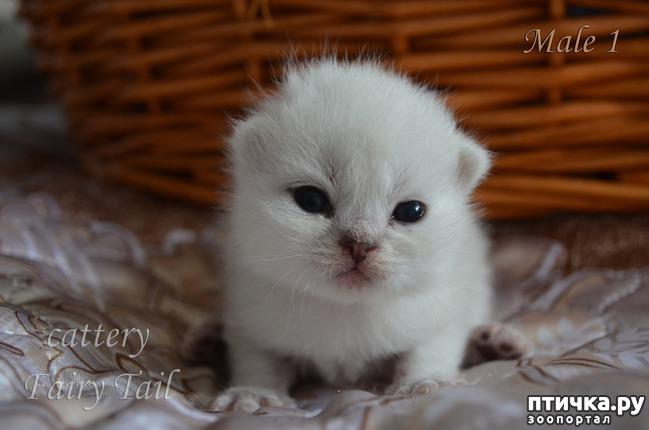 фото 4: Нас поработили инопланетяне или котята открыли глазки