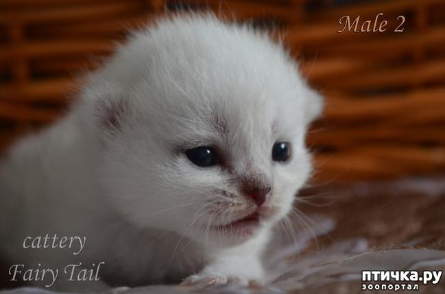 фото 6: Нас поработили инопланетяне или котята открыли глазки