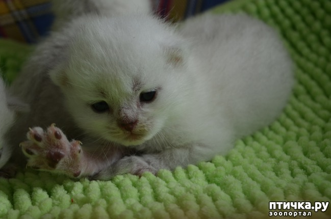 фото 10: Нас поработили инопланетяне или котята открыли глазки