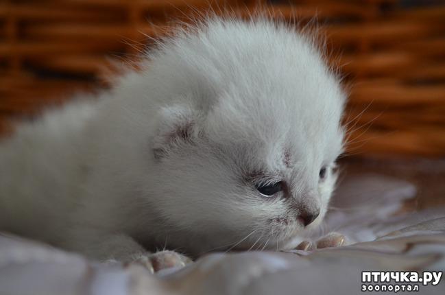 фото 17: Нас поработили инопланетяне или котята открыли глазки