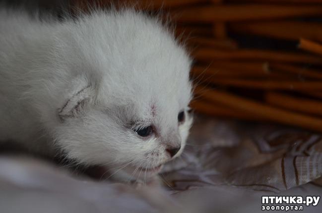 фото 16: Нас поработили инопланетяне или котята открыли глазки