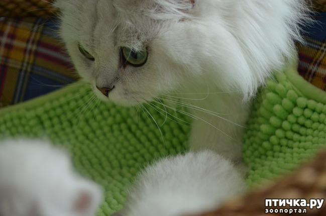 фото 23: Нас поработили инопланетяне или котята открыли глазки