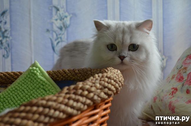 фото 22: Нас поработили инопланетяне или котята открыли глазки