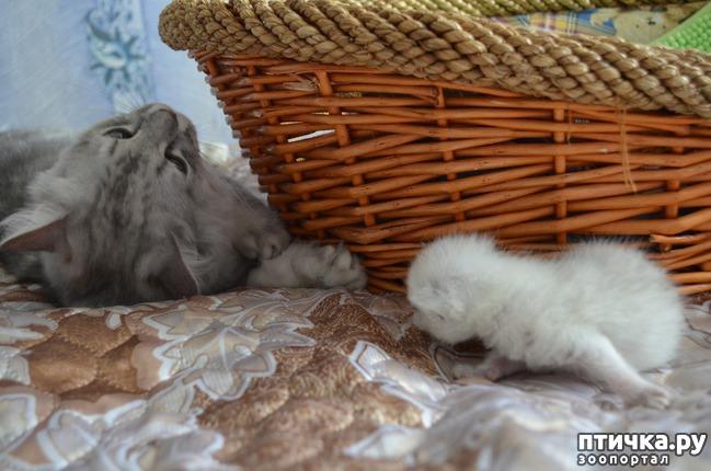 фото 20: Нас поработили инопланетяне или котята открыли глазки