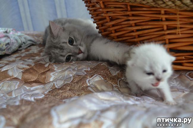 фото 19: Нас поработили инопланетяне или котята открыли глазки
