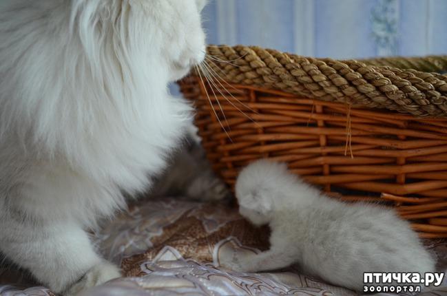 фото 24: Нас поработили инопланетяне или котята открыли глазки