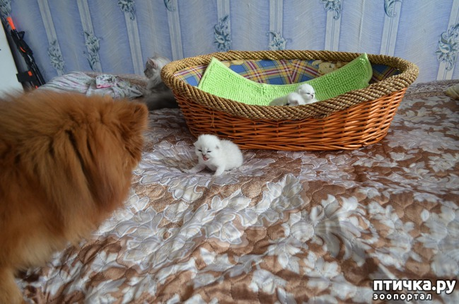 фото 27: Нас поработили инопланетяне или котята открыли глазки