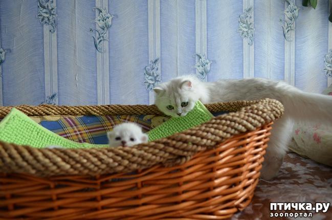 фото 26: Нас поработили инопланетяне или котята открыли глазки