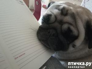 фото: Читала и уснула!