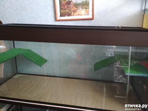 фото 2: Минимум о содержании красноухих черепах