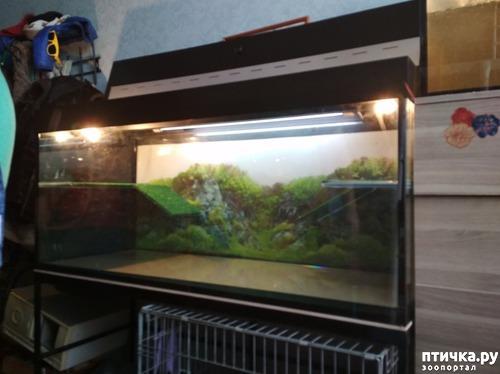 фото 3: Минимум о содержании красноухих черепах