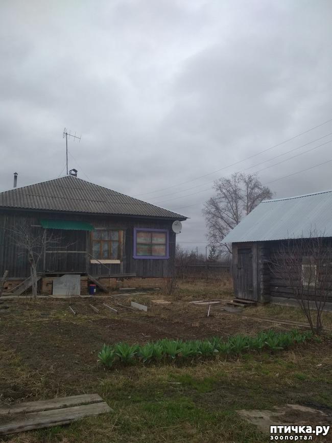 фото 1: Мечты сбываются. Переезд из Москвы в село.