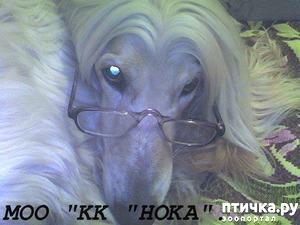 фото: Душа собачника - она непостижима... для обывательских сердец!