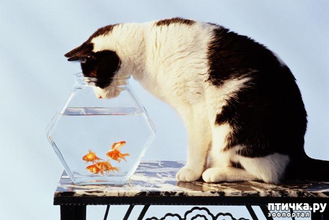 фото 1: Тайная жизнь домашних животных - не мультфильм