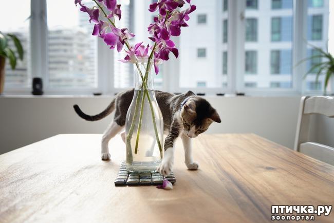 фото 5: Тайная жизнь домашних животных - не мультфильм