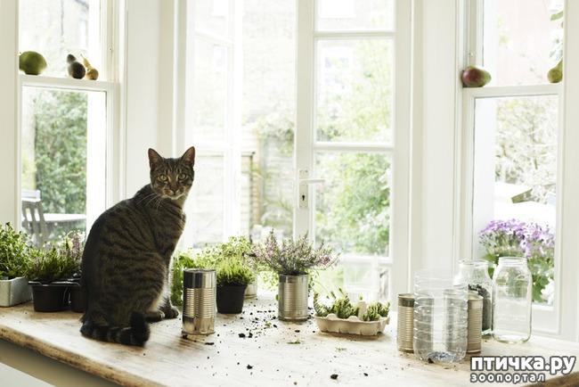 фото 6: Тайная жизнь домашних животных - не мультфильм