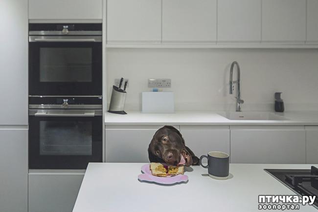 фото 7: Тайная жизнь домашних животных - не мультфильм
