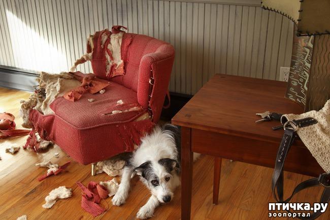 фото 9: Тайная жизнь домашних животных - не мультфильм