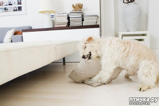 фото 10: Тайная жизнь домашних животных - не мультфильм