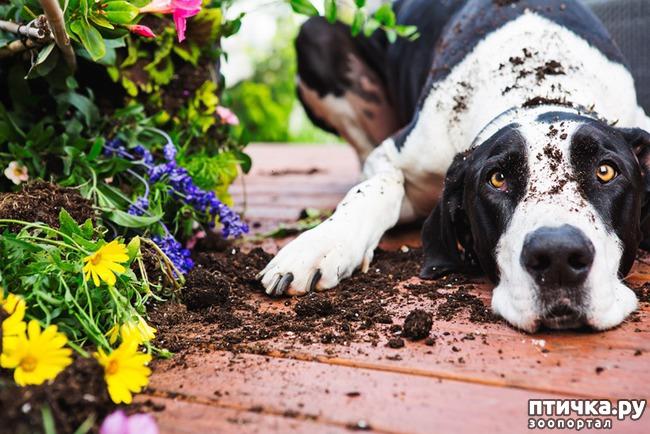 фото 11: Тайная жизнь домашних животных - не мультфильм