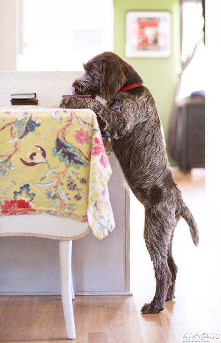 фото 12: Тайная жизнь домашних животных - не мультфильм
