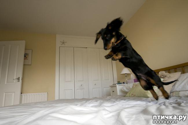 фото 13: Тайная жизнь домашних животных - не мультфильм