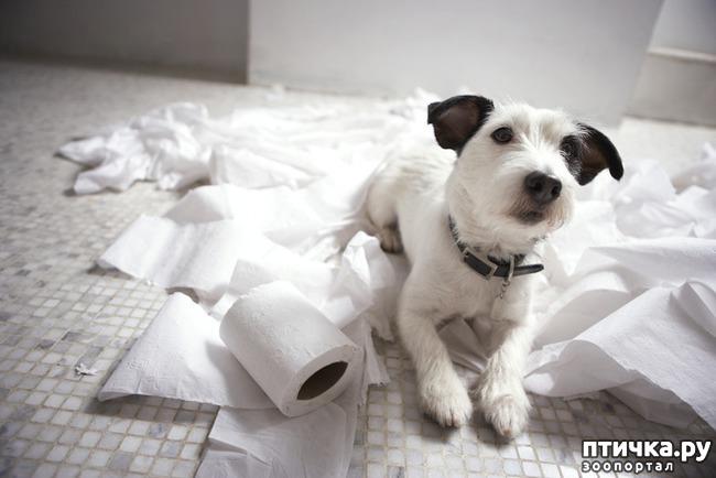 фото 14: Тайная жизнь домашних животных - не мультфильм