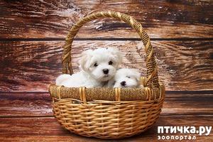 фото: Как выбрать щенка