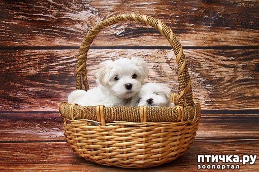 фото 1: Как выбрать щенка