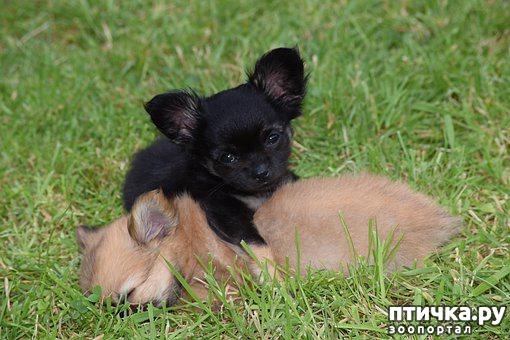 фото 2: Как выбрать щенка