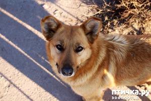 фото: Мистическая история о рыжих собаках