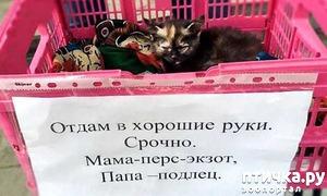 фото: Забавные объявления про животных 2