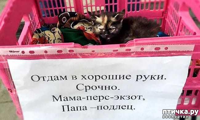 фото 1: Забавные объявления про животных 2