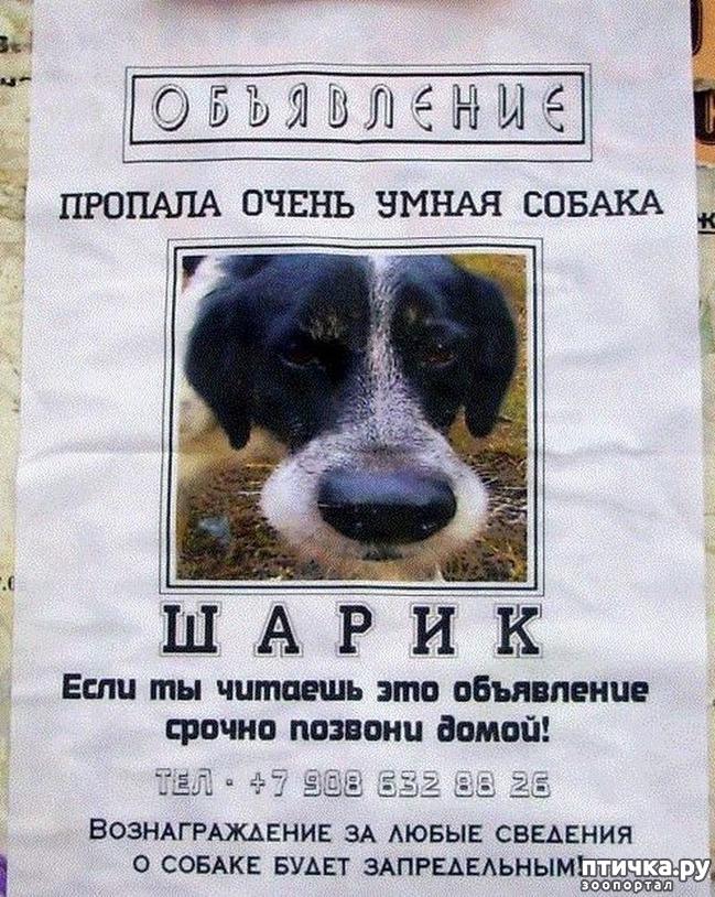 фото 4: Забавные объявления про животных 2