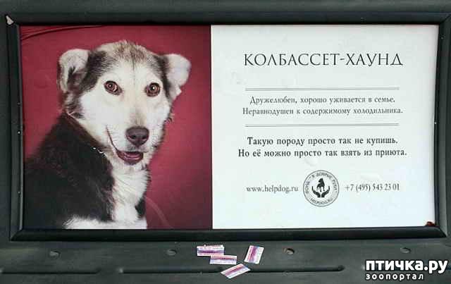 фото 5: Забавные объявления про животных 2